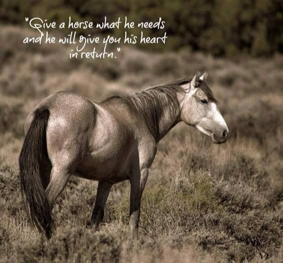 Pin by Lydia on Horse and Country Life Quotes | Wild ...