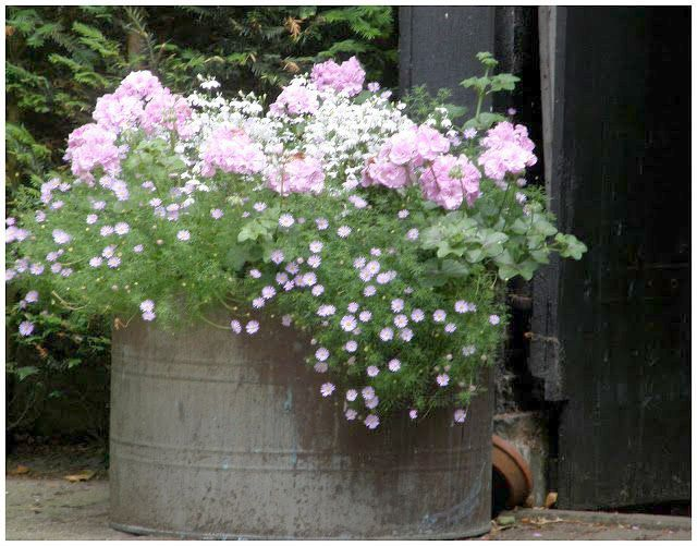 Container Gardening Complete their Container Gardening With Flowers And Vegetabl…