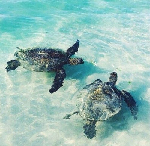 Beleef de ultieme relaxvakantie op Zanzibar 🌴 🐚 Voor een scherpe prijs geniet jij 9 dagen van dit tropische eiland Spot schildpadden, zwem in het heldere water en voel het witte zand tussen je tenen... https://ticketspy.nl/deals/the-stress-free-zone-wacht-op-jou-9-dagen-zanzibar-va-e509/