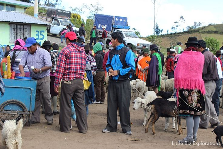 Visit to Guantualo animal market in Ecuador. Experience it when you hike Quilotoa Loop.