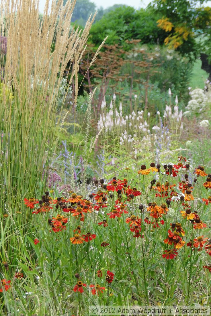 17 Best Images About Planting Design Piet Oudolf On