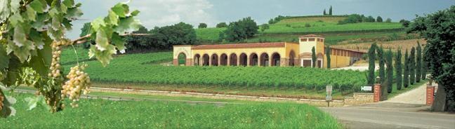 Monte Tondo, adorable winery