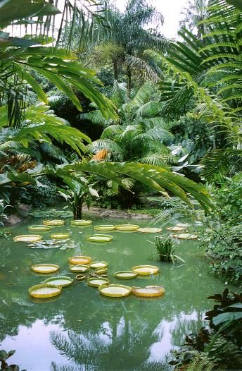 Singapore Botanic Gardens / Unesco Word Heritage List