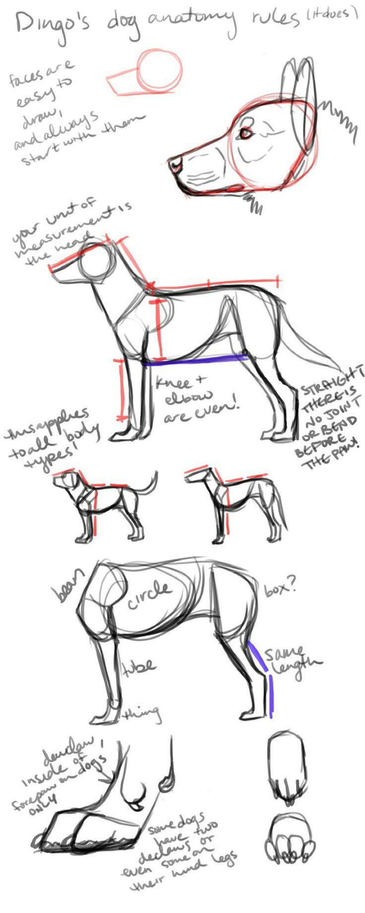 34 besten Drawing Dogs Bilder auf Pinterest | Tiere zeichnen ...
