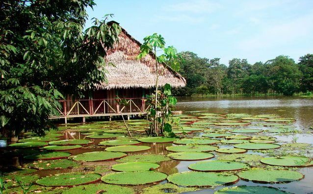 Reserva Natural Flor de Loto, Parque Nacional Natural Amacayacu: Leticia, Colombia #digoViajes #digoEcoturismo