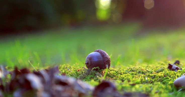 Want to do something fun with the family during the next school holiday period? Venture outside and conduct a scavenger hunt. Here is a list you can use which includes, for example:  - an acorn  - a flying insect   - a tree stump  - a spider web  Tick them as you find them!  http://qoo.ly/ix6g6