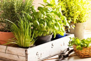 Come coltivare le erbe aromatiche in giardino, sul balcone o in casa | I sempreverdi