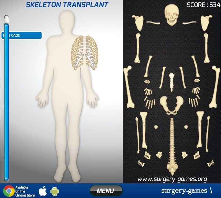 best 20+ skeletal system functions ideas on pinterest | the human, Skeleton