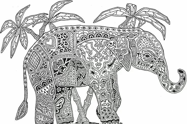 Olifant Colouring Pages Animals Pinterest