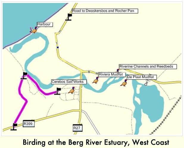 Birding at the Berg River Estuary, West Coast — Many rare species have been recorded, some of them for the first time in South Africa. These include the Little Blue Heron, Lesser Gallinule, Franklin's Gull, Broad-billed Sandpiper,etc.