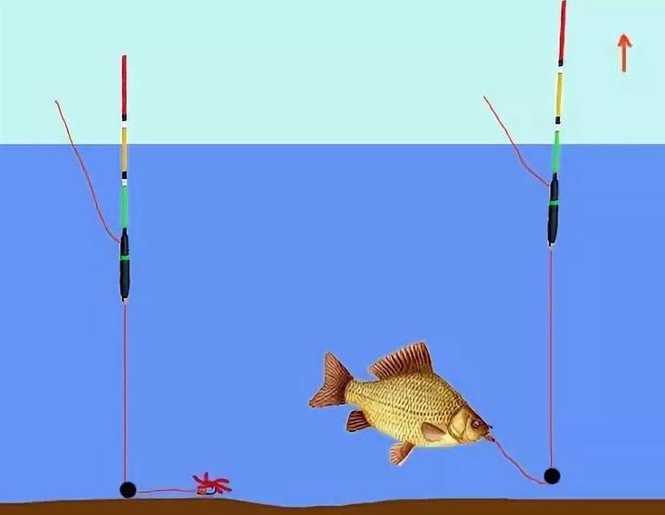 Удочка для рыбалки на карася