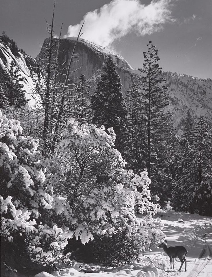 ansel adams half dome Bridalveil fall is emblematic of the images adams made during the late 1920s, a critical development period in his career during this time, he asserted control of the photographic process.