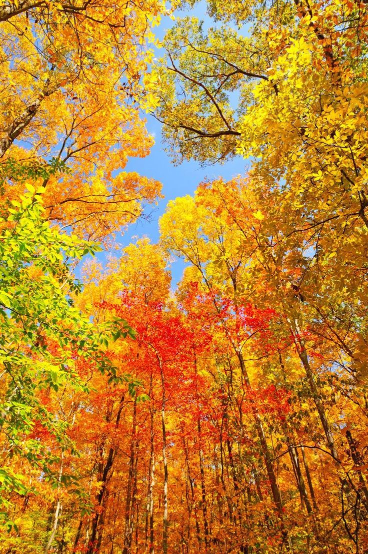 7 perfect fall foliage drives for taking in the scenery