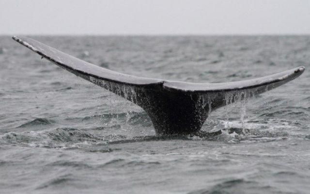 """Viaggio in Baja California (Messico) Continua il nostro viaggio alla scoperta della Baja California messicana a """"caccia"""" di balene. Infine dopo vari giorni """"on the road"""" ci regaliamo alcuni giorni di meritato riposto nello spettacolare ##viaggio#messico#bajacalifornia"""