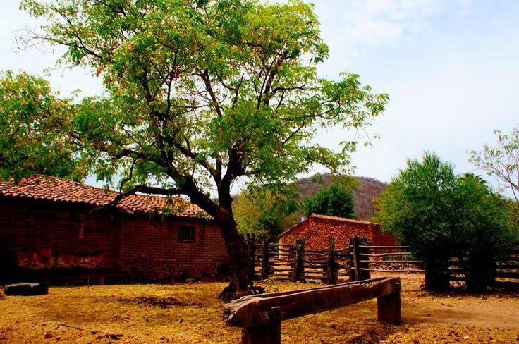 Image result for fotos de campanillas, san ignacio sinaloa