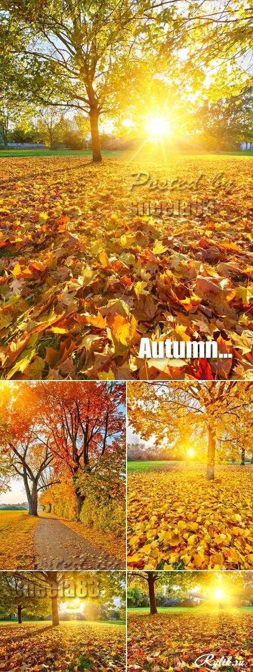 Осенний парк в солнечный день фото клипарт. Stock Photo - Sunny Autumn Day