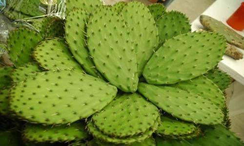 Oggi mangio..un cactus! Le pale di fico d'india, un piatto prelibato e salutare