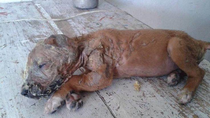Lic. Rolando Zapata Bello,   Gobernador del Estado de Yucatán.   El pasado jueves 23 de junio de 2016 en la Colonia Jesús Carranza, fue descubierta Marina, una cachorra de apenas 2 meses de edad aún con vida, completamente llena de Resistol, lo que le ocasionó quemaduras de primer grado en todo el cuerpo....