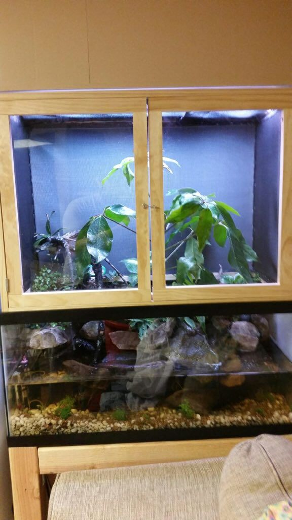 17 best images about reptiles on pinterest fake rock for 10 gallon fish tank stocking ideas