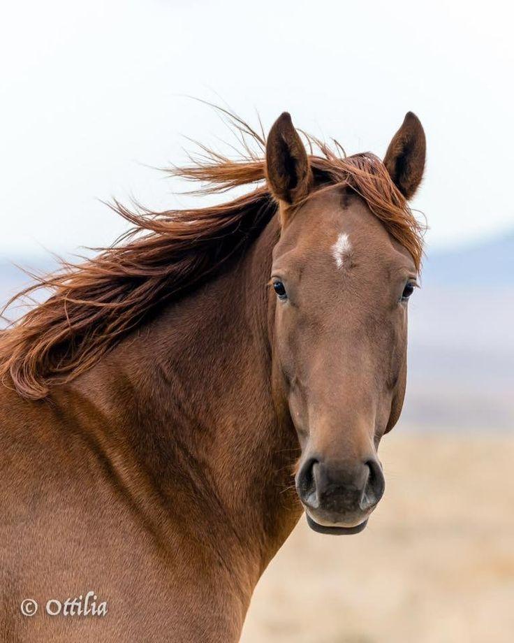 506 best Beautiful wild horses still running free images ...