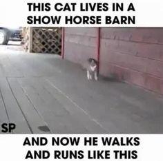 Le chat qui se prenait pour un cheval. - Il vit dans un centre équestre où l'on entraîne des chevaux au spectacle. - I am a... HORSE