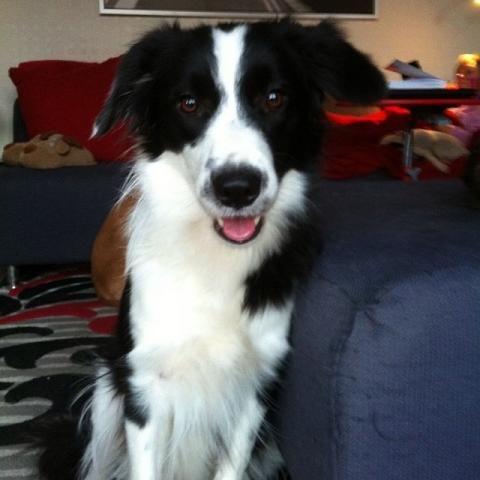 Neem de perfecte foto van je huisdier Foto van Toulouse, hond van The New Journalist