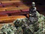 Buddha Bud