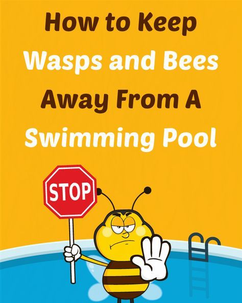 How to Keep Wasps and Bees Away From a Swimming Pool