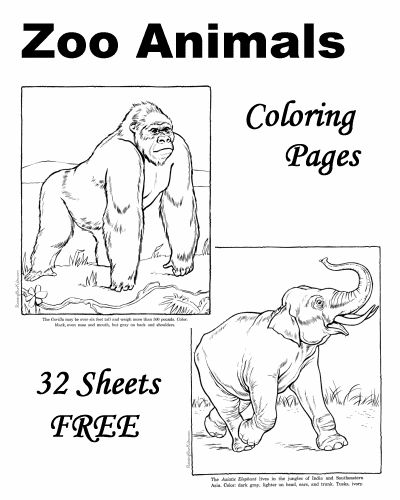 Zoo Animal Coloring Pages! 32 Sheets FREE!