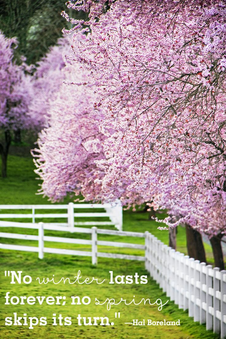 """""""No winter lasts forever; no spring skips its turn."""""""