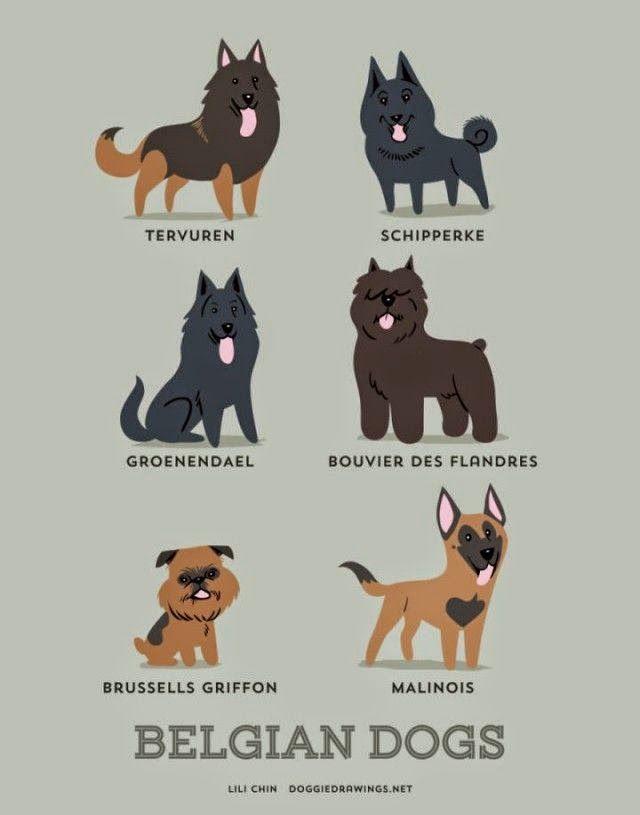 cachorro, dog