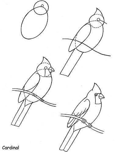 How to Draw Birds - Cardinal  by neefer, via Flickr