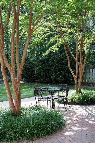 love the crepe myrtle - the trunks are beautiful...I love the reddish twisting trunk :) love white or pale pink
