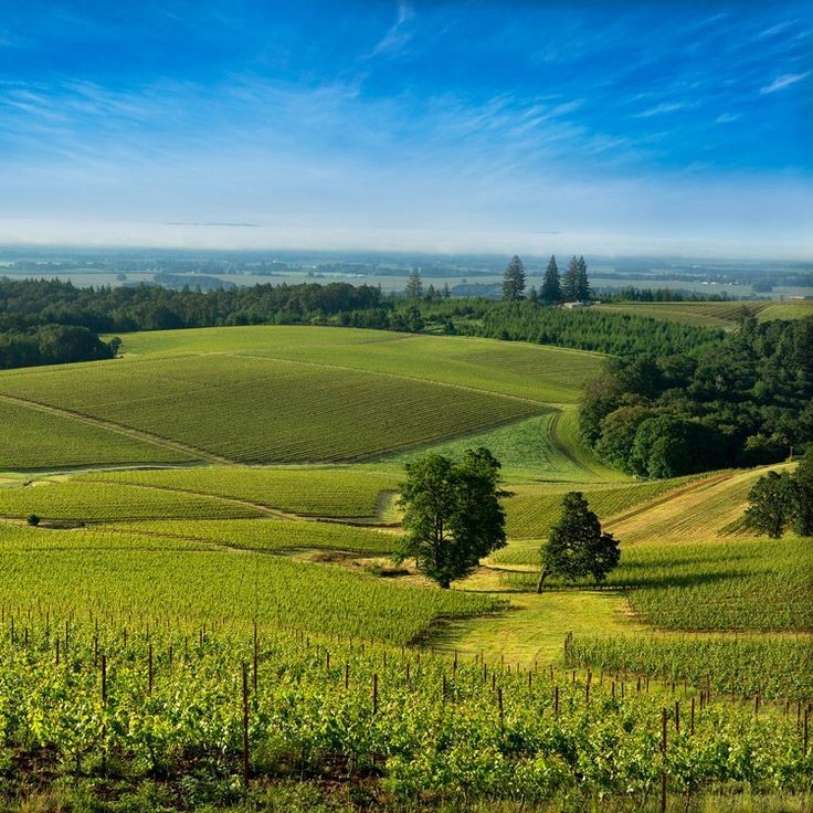 Go to McMinnville, Oregon, for Your Next Girls' Weekend