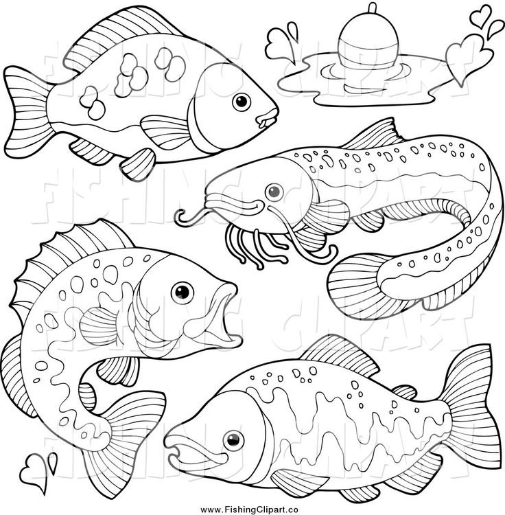 Freshwater Fish Coloring Pages. Freshwater Fish Coloring Pages 17786 757 best Clip Art Sealife images on Pinterest  Glitter tattoos