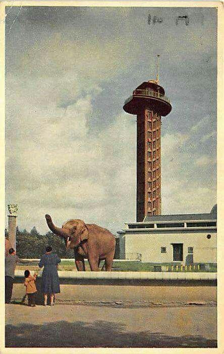 Diergaarde Blijdorp begin jaren 50