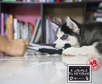 Realizza un gioco fai-da-te per il tuo cane facile ed economico | purina.it