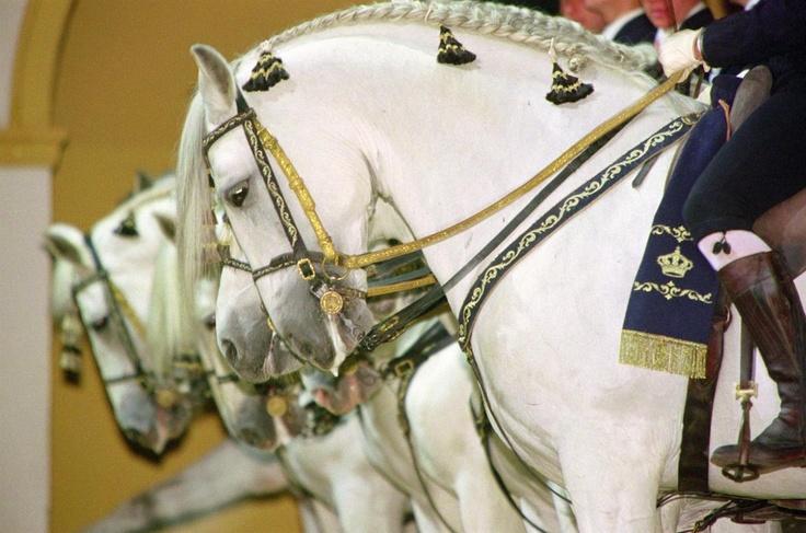 """El caballo andaluz es una raza de caballo originaria de Andalucía. Se trata de un caballo ibérico que está entre las razas equinas más antiguas del mundo. En España también se le conoce comúnmente como """"caballo español"""" y se le denomina oficialmente """"Pura Raza Española"""" (PRE), porque se considera que el andaluz es el caballo español por antonomasia, a pesar de que existen muchas otras razas equinas españolas. El caballo cartujano es una de las líneas de cría más importantes de esta raza."""