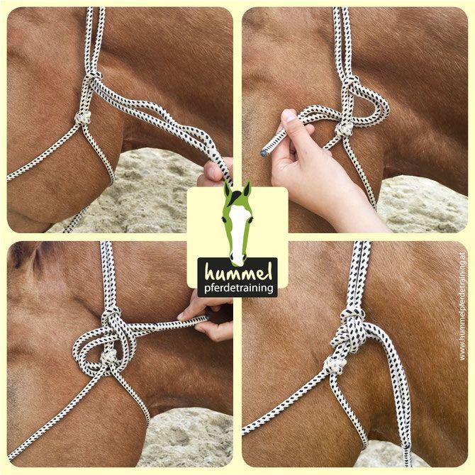 Knotenhalfter anpassen, richtig schließen, rope halter correct use, horsemanship, equipment fitting, Pferdetraining