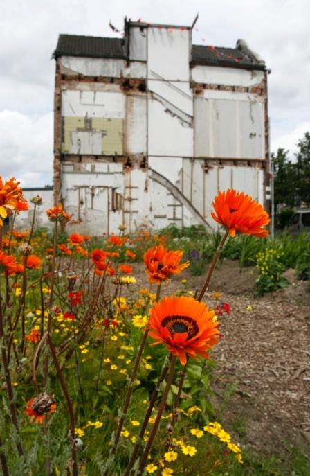 Flowers in the in-between garden at Afrikaanderwijk Rotterdam