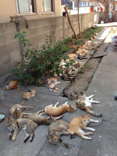 This happens when you plant catnip behind your house