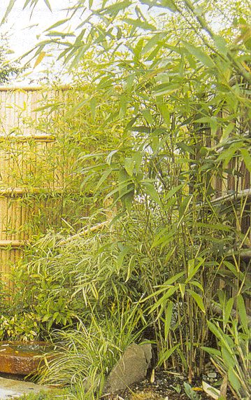 Bamboo Sourcery Bamboo Sourcery - Plant Price List - Bamboo plants for sale at our specialty nursery in Sebastopol, CA. Buy online!