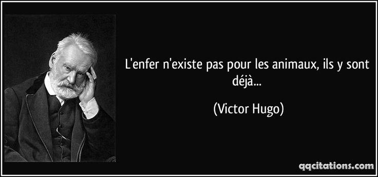 L'enfer n'existe pas pour les animaux, ils y sont déjà... (Victor Hugo) #citations #VictorHugo