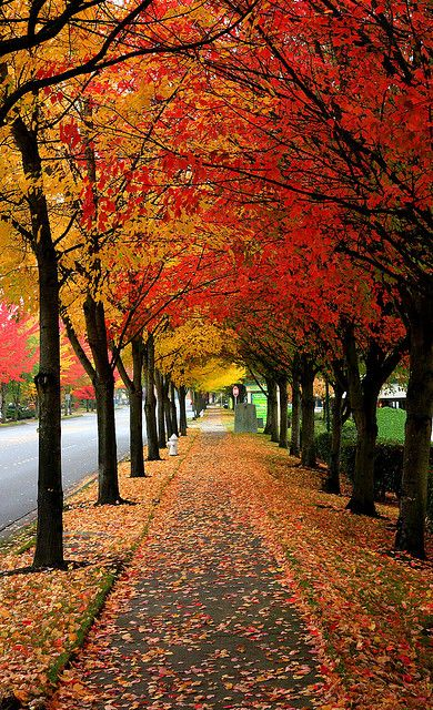 falling leaves...I want to live in a place like this. Where is this?