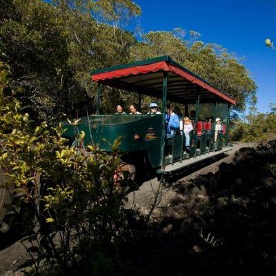Fullers Rangitoto Volcanic Explorer Tour | AucklandNZ.com