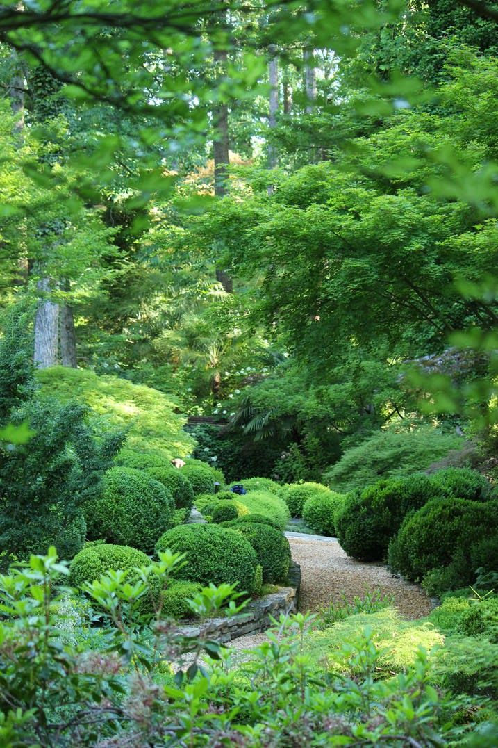 gardening with boxwoods | ... -Hudgins-May-11-2012-garden-path-with-boxwood-maples_main_banner.jpg