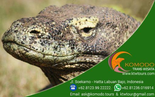 Wonderfull Komodo Island Tours - http://www.komodo.tours
