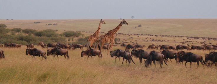 Kenya is a Country capable of offering inspiration and excitement like no other Country, and a Safari it's wonderful experience for the whole family, a unique opportunity to allow our children in closer proximity with the wildlife and its natural habitat in order to teach the little ones, the new generation, to have manners and respect towards nature and the environment in general.