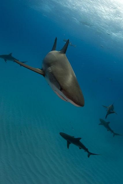 Swimming with sharks!! DONE BABY :D