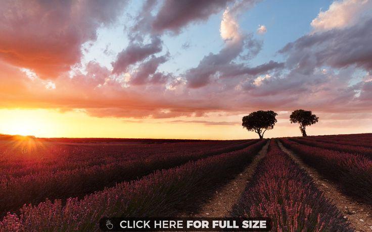 1000 ideas about field wallpaper on pinterest lavender - Bat and poppy wallpaper ...